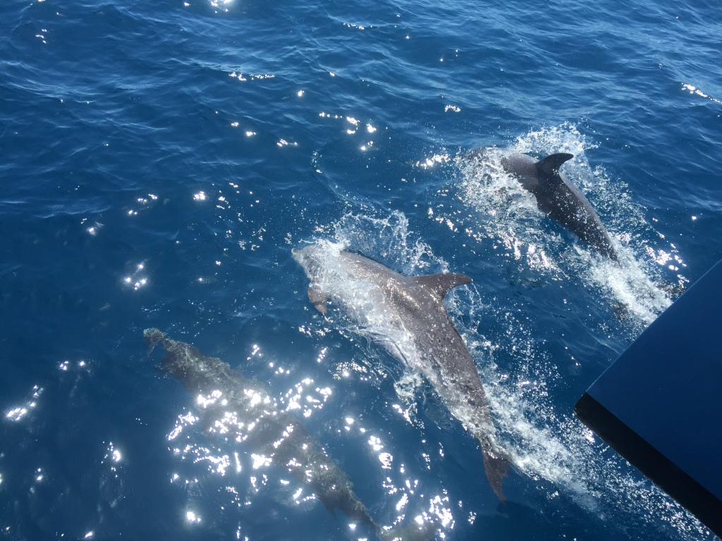 Dolphins (April 2015) 2