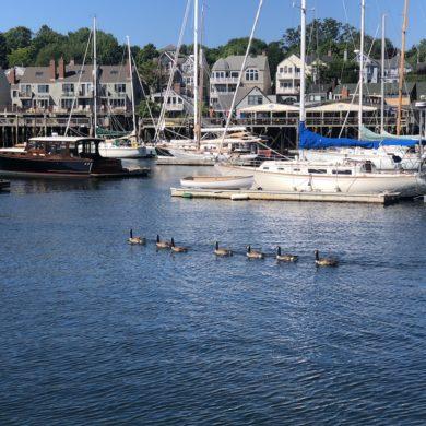 Busy traffic in Camden Harbor