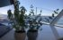 Herbal Plants on board Moonwave