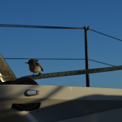 small bird visiting us on Moonwave