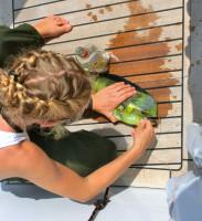 caught fish on deck