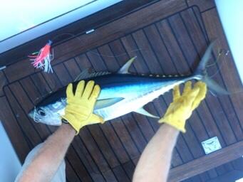 Nice tuna caught on board