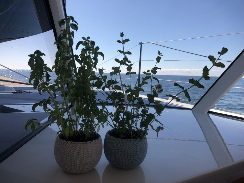 Mint & Basil Plant on board Moonwave