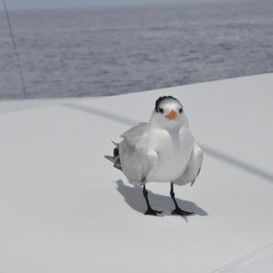 Moonwave coach roof - bird resting