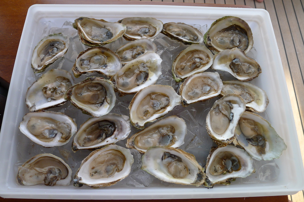 New England July 2016 Oysters