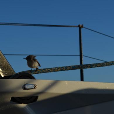 small bird visiting us on Moonwave